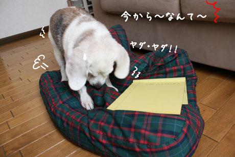 3_20100918140813.jpg
