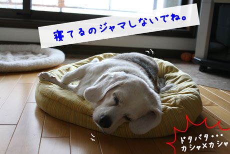 3_20100923143810.jpg