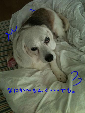 3_20100926134438.jpg