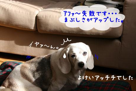 3_20101007144343.jpg