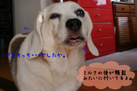 3_20101018183220.jpg