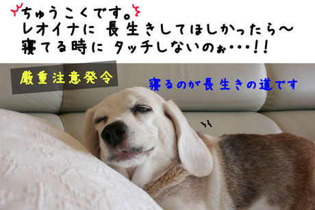 3_20101019165033.jpg