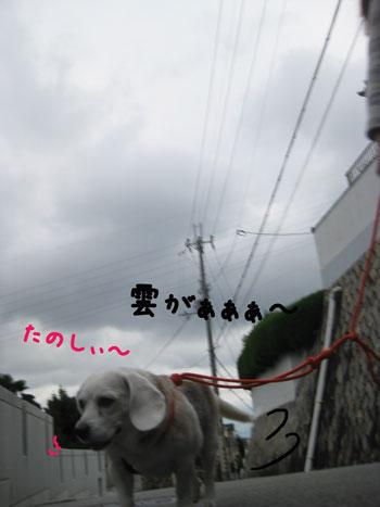 3_20101030145731.jpg