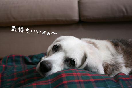 3_20101101132638.jpg