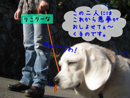 3_20101107144719.jpg