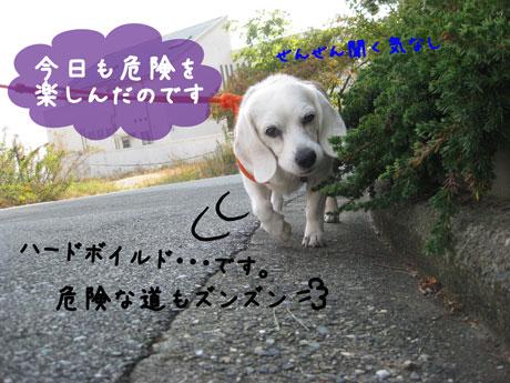 3_20101111144534.jpg