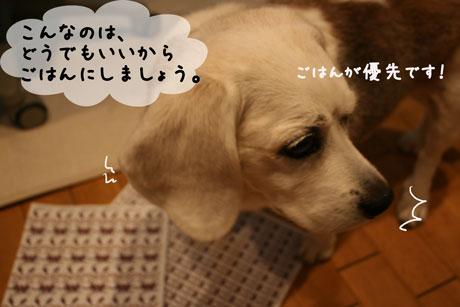 3_20101127180629.jpg