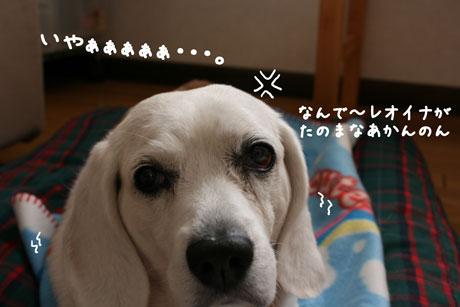 3_20101202145240.jpg