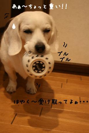 3_20101203200100.jpg