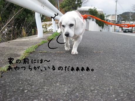 3_20101209172715.jpg