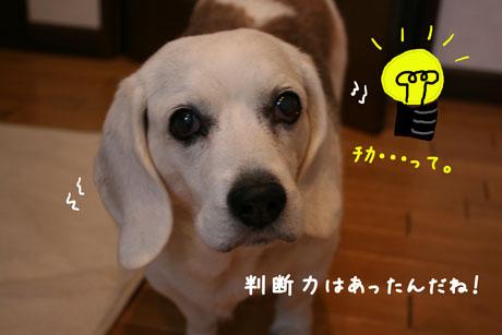 3_20101216154019.jpg