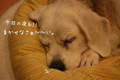 3_20101221171058.jpg