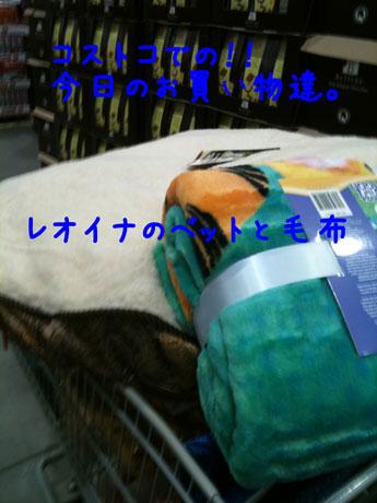 3_20101227214407.jpg