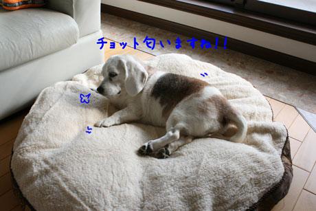3_20101228154418.jpg