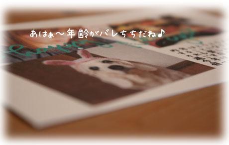 3_20110103171208.jpg