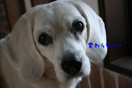 3_20110104171312.jpg
