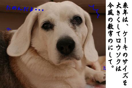 3_20110106155324.jpg