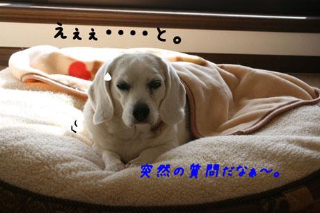 3_20110107115618.jpg