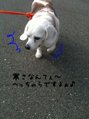 3_20110108204543.jpg