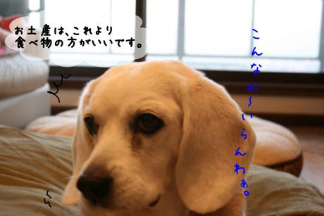 3_20110111173629.jpg