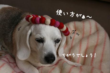 3_20110112144451.jpg