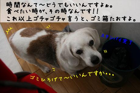 3_20110113111119.jpg