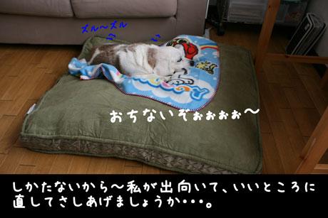 3_20110114114026.jpg
