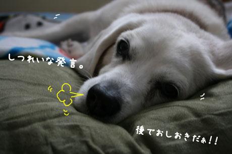 3_20110116145511.jpg