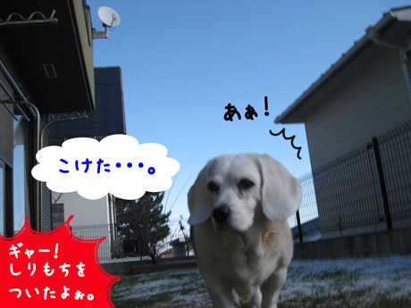 3_20110117125443.jpg