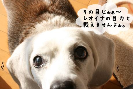 3_20110118100723.jpg