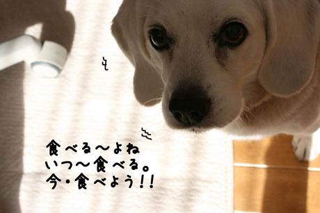 3_20110127161059.jpg