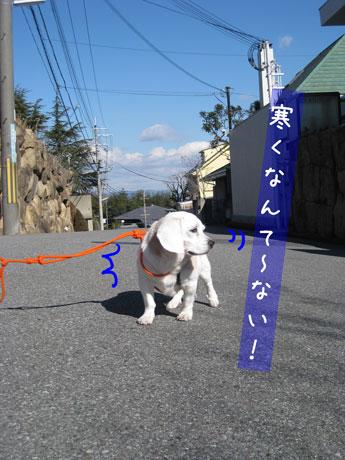 3_20110131161453.jpg