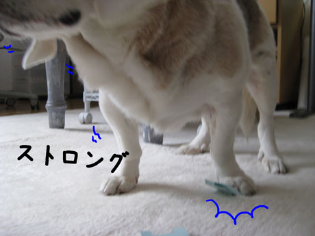 3_20110209151237.jpg