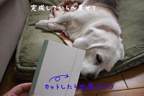 3_20110212152532.jpg