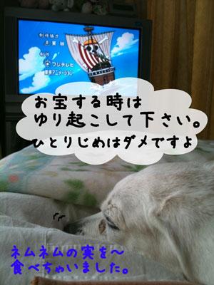 3_20110213185153.jpg