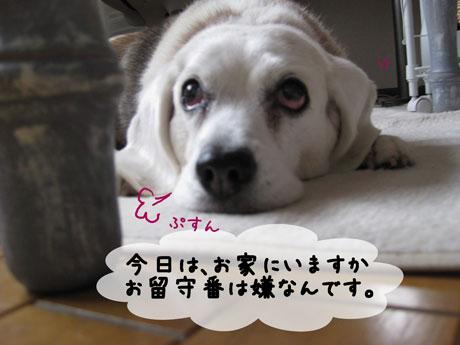 3_20110217142638.jpg