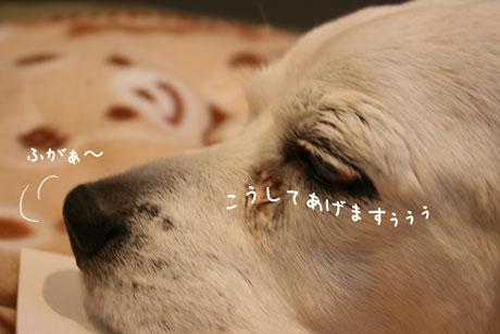 3_20110217171048.jpg