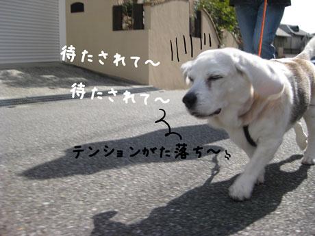3_20110219144135.jpg