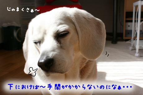 3_20110221140331.jpg