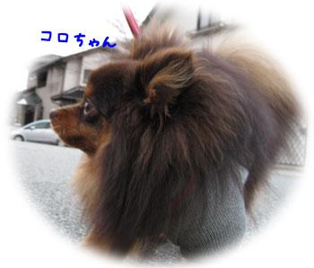 3_20110228181135.jpg