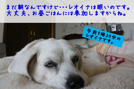 3_20110302114820.jpg