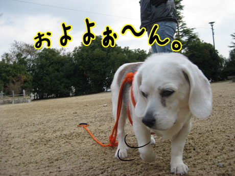 3_20110308144622.jpg