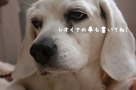 3_20110310114133.jpg