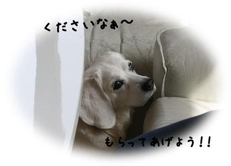 3_20110314111239.jpg