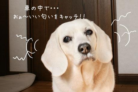 3_20110318155645.jpg