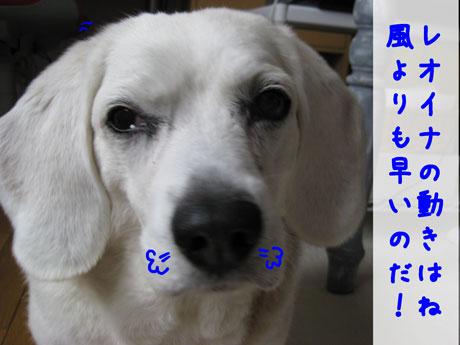 3_20110320133642.jpg