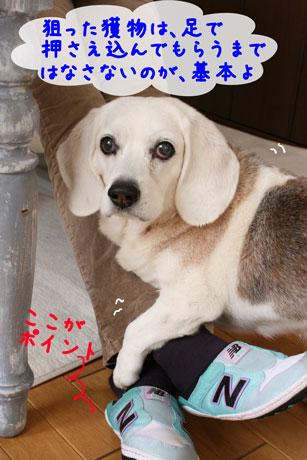 3_20110324135921.jpg