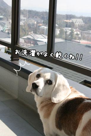 3_20110328104621.jpg