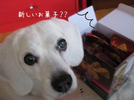 3_20110330180946.jpg