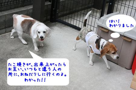 4_20091025151816.jpg